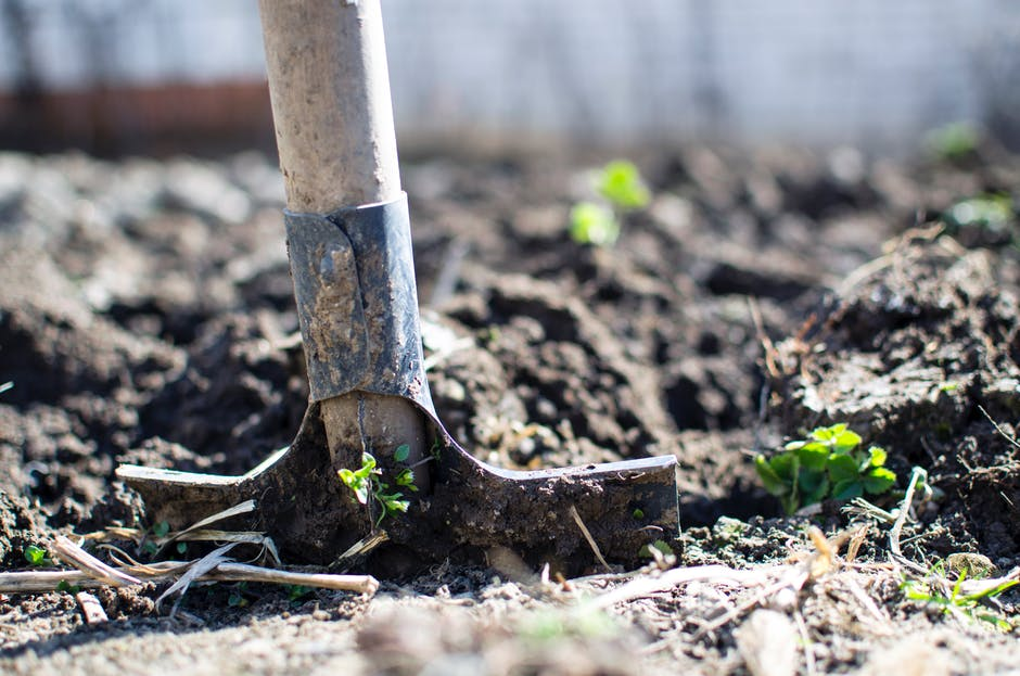 4 Ways to Properly Clean Gardening Tools