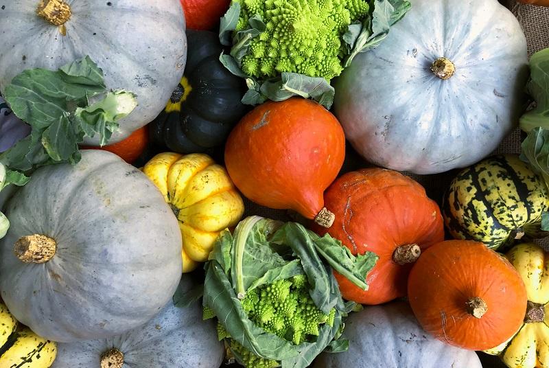 Plant a Vegetable Patch